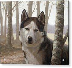 Husky In The Woods Acrylic Print