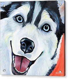 Husky Acrylic Print by Melissa Smith