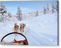 Husky Ride Acrylic Print by Jpa1999