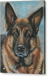 Hussler-german Shepherd Dog Acrylic Print by Sciandra
