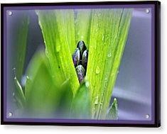 Hyacinth For Micah Acrylic Print