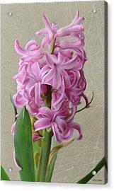 Hyacinth Pink Acrylic Print