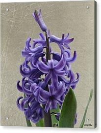 Hyacinth Purple Acrylic Print by Jeffrey Kolker