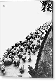 Hyde Park Sheep Flock Acrylic Print by Underwood Archives