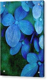 Hydrangea Blues Acrylic Print by Christine Annas