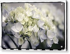 Acrylic Print featuring the photograph Hydrangea  by Craig Perry-Ollila