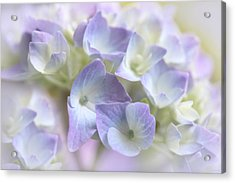 Hydrangea Floral Macro Acrylic Print by Jennie Marie Schell