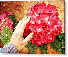 Acrylic Print featuring the digital art Hydrangea by Helene U Taylor