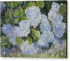Hydrangea IIi Sold Acrylic Print by Gloria Turner