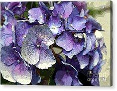 Hydrangea Acrylic Print by Rosemary Aubut