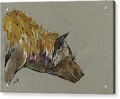 Hyena Head Acrylic Print