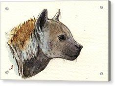 Hyena Head Study Acrylic Print