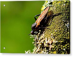 Hymenoptera Acrylic Print by Tommytechno Sweden
