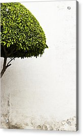 Hypnotic Tree Acrylic Print by Prakash Ghai