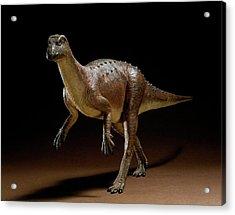Hypsilophodon Dinosaur Model Acrylic Print by Natural History Museum, London/science Photo Library