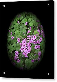 I Am In Clover Acrylic Print