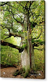 I Am Nearly 1000 Years Old Acrylic Print