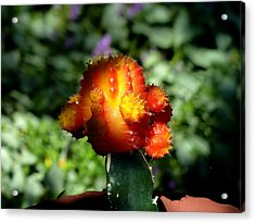 I Am Pretty But Spiky Acrylic Print