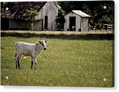 I Am Waiting Acrylic Print