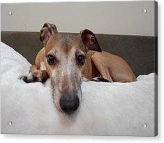 I Am Watching You - Dragon - Italian Greyhound Acrylic Print by Santos Arellano