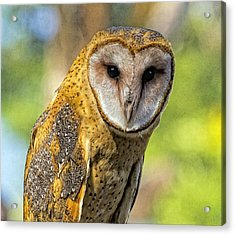 Acrylic Print featuring the photograph I Am Wise by Constantine Gregory
