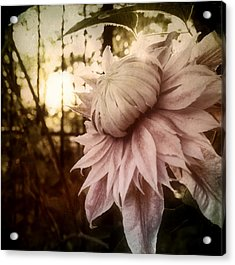 Acrylic Print featuring the photograph I Bloom Only For You She Whispered by Susan Maxwell Schmidt