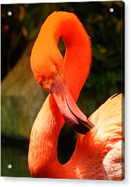 I Can Count To 8 - Flamingo Acrylic Print by DerekTXFactor Creative