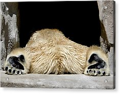 I Cant Bear It Acrylic Print