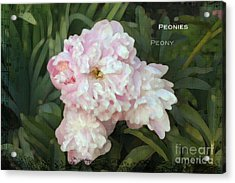 I Cry For You My Peonies Acrylic Print by Rosemary Aubut