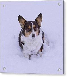 I Do Not Like Snow Acrylic Print by Mike McGlothlen