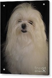 I Dont Like Topknots Acrylic Print by Margaret Newcomb