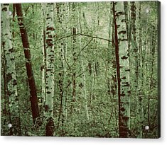 Dreams Of A Forest Acrylic Print