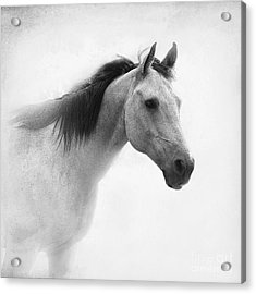 I Dream Of Horses Acrylic Print