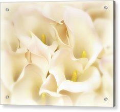 Acrylic Print featuring the photograph I Dreamed Of Calla Lilies by Gigi Ebert