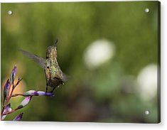 I Got It Acrylic Print by Mike Herdering