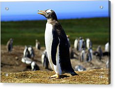 I Have A Dream - Penguin Acrylic Print by DerekTXFactor Creative