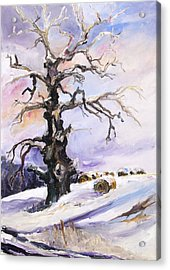 I Have Got Stories To Tell Old Oak Tree In Mecklenburg Germany Acrylic Print by Barbara Pommerenke