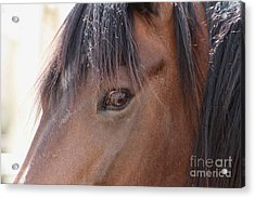 I Have My Eye On You Acrylic Print by Fiona Kennard