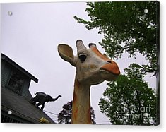 I Have No Idea What That Elephant Is Thinking Acrylic Print by John Malone