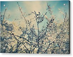 I Hope Spring Will Be Kind Acrylic Print by Laurie Search