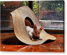 I Just Love My New Hat Acrylic Print