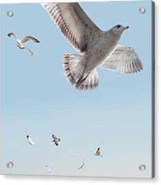 I Just Want To Fly Acrylic Print
