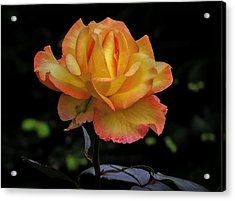Acrylic Print featuring the photograph I Know I'm Beautiful by Hanny Heim