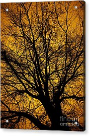 I Love Bare Trees Acrylic Print