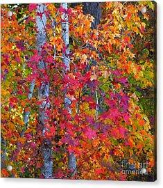 I Love Fall Acrylic Print by Scott Cameron