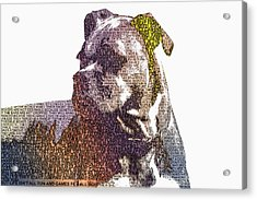 Dog - Boxer - Pet - I Love My Boxer Acrylic Print by Barry Jones