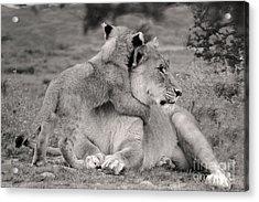 I Love My Momi Acrylic Print by Christine Sponchia