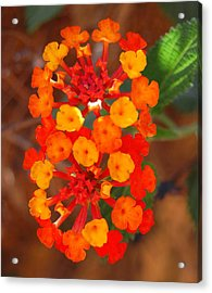 Acrylic Print featuring the photograph I Love Orange by Lew Davis