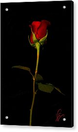 I Love You Acrylic Print by Nancy Edwards