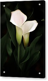 I Love You Acrylic Print by Penny Lisowski